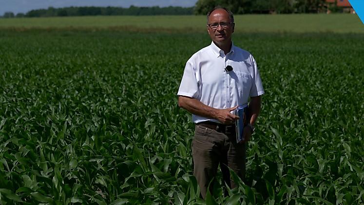 Standort Raden - Maissortenversuch Überblick