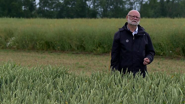 Standort Schirnau - Fungizidversuch im Weizen