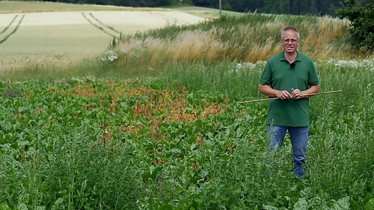 Standortreport Ronneburg - Herbizidmaßnahmen im Zuckerrübenanbau