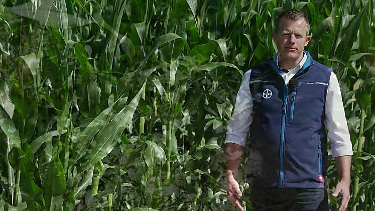 Standortreport Aich - Herbizidbehandlung in Mais
