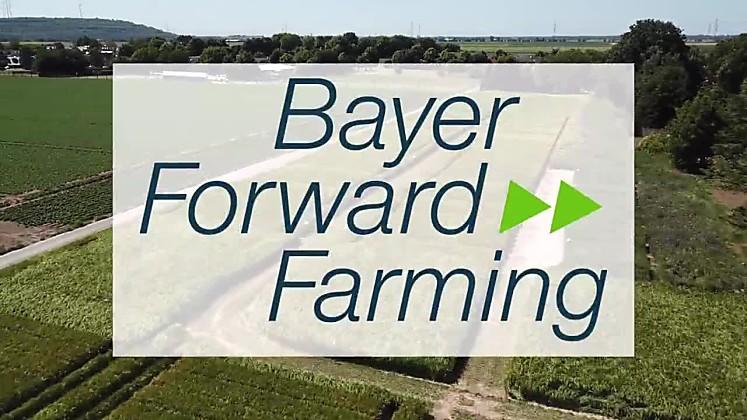 Blühstreifen - Bayer ForwardFarm Rommerskirchen