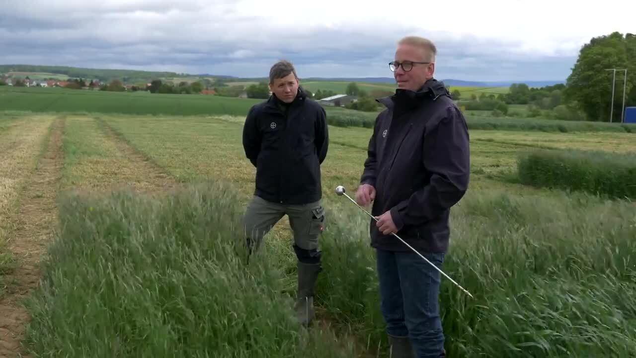 Standortreport Ronneburg - Überzeugende Ackerfuchsschwanzbekämpfung in Winterweizen