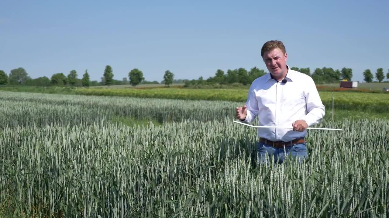 Standortreport Nauen - Neues aus der Getreide Herbizidentwicklung