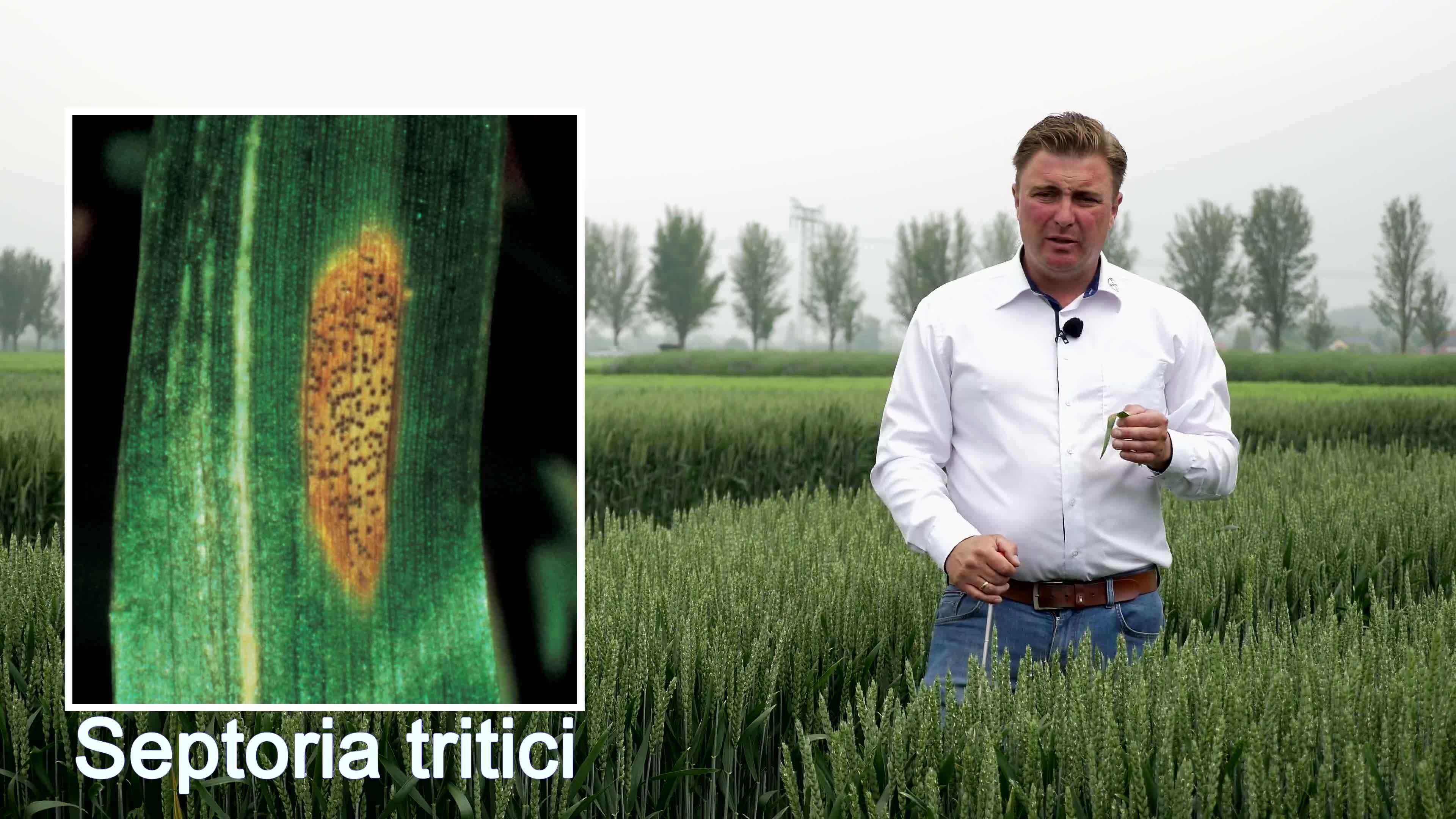 Standortreport Döbernitz - Fungizidstrategie gegen Septoria tritici in Winterweizen